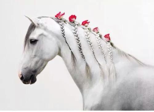 severelymagicalthings.com/manifique-cheval/