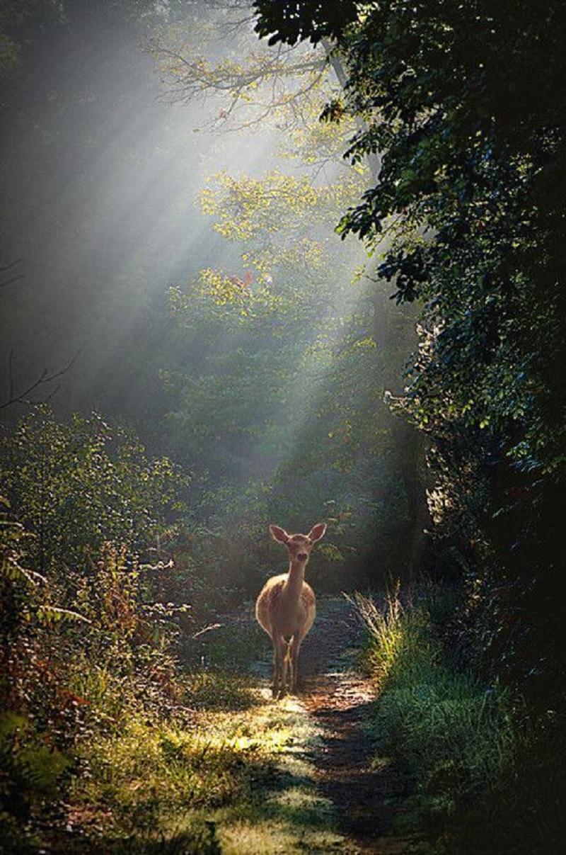 severelymagicalthings.com/magical-deer/