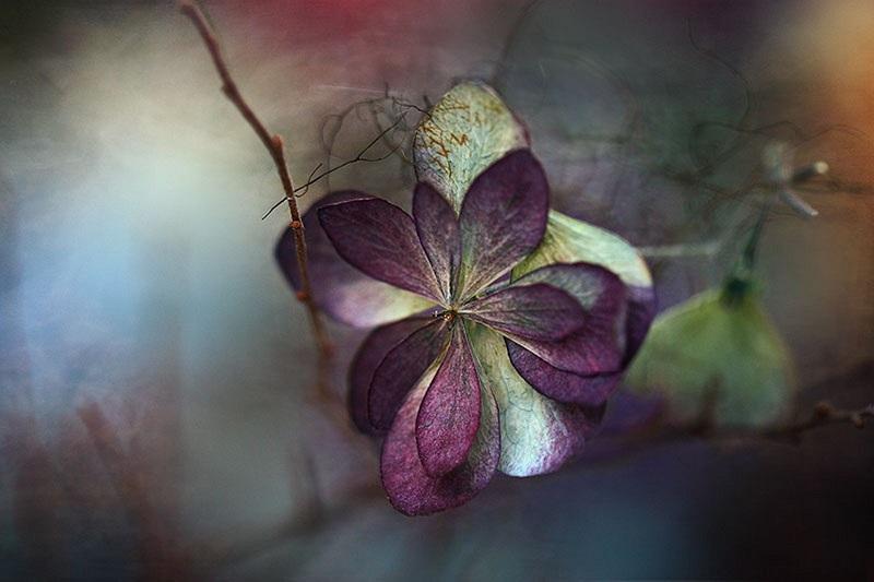 severelymagicalthings.com/purple-flower-magic/