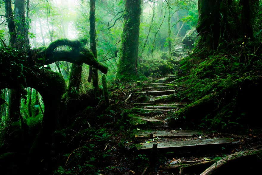 severelymagicalthings.com/severely-magical-pathways/