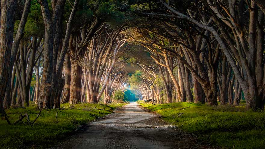 Severely Magical Pathways.