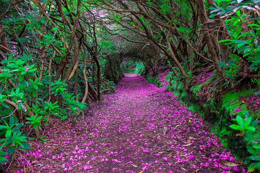 severelymagicalthings.com/severely-magical-pathways